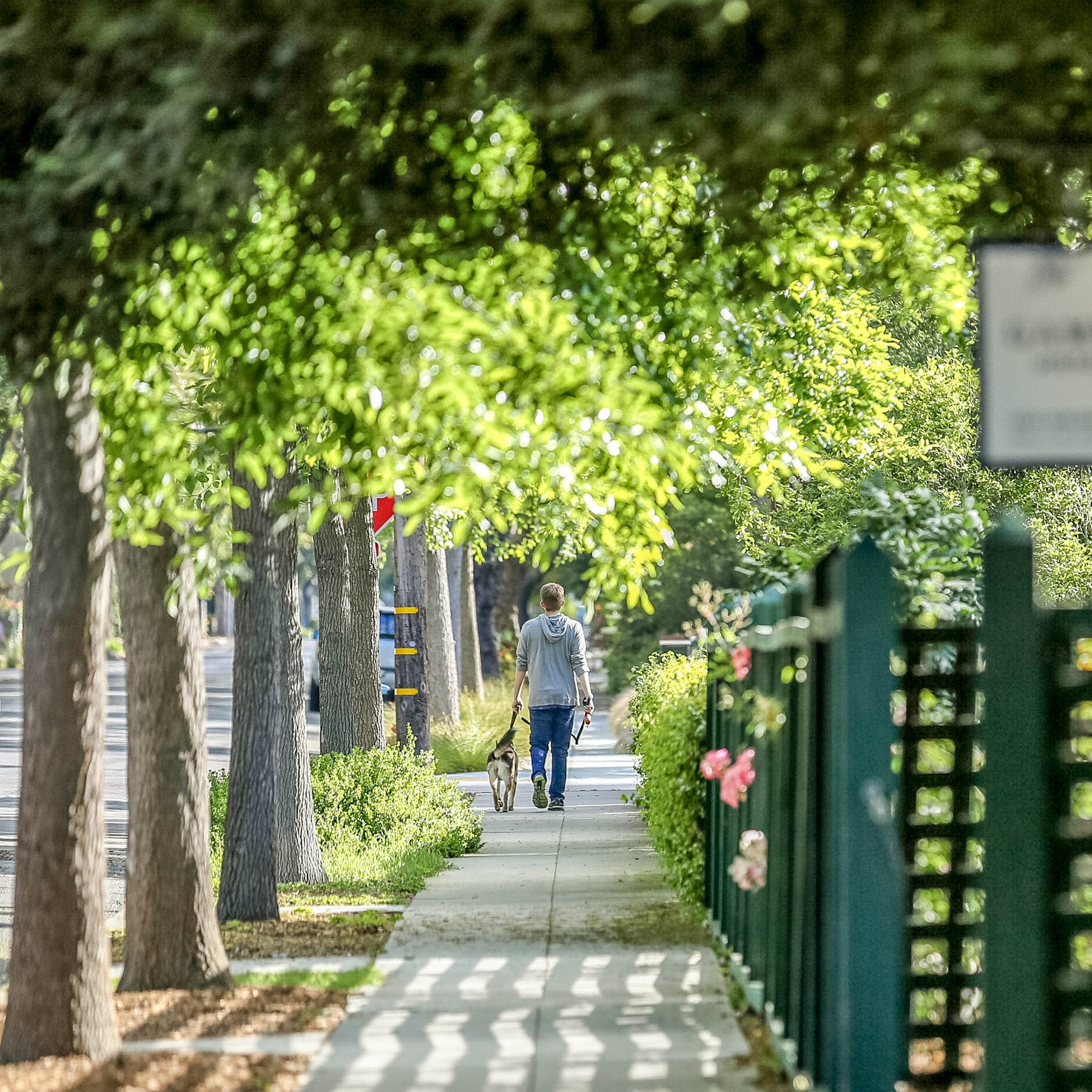 Old Palo Alto, Palo Alto CA - Neighborhood Guide | Trulia