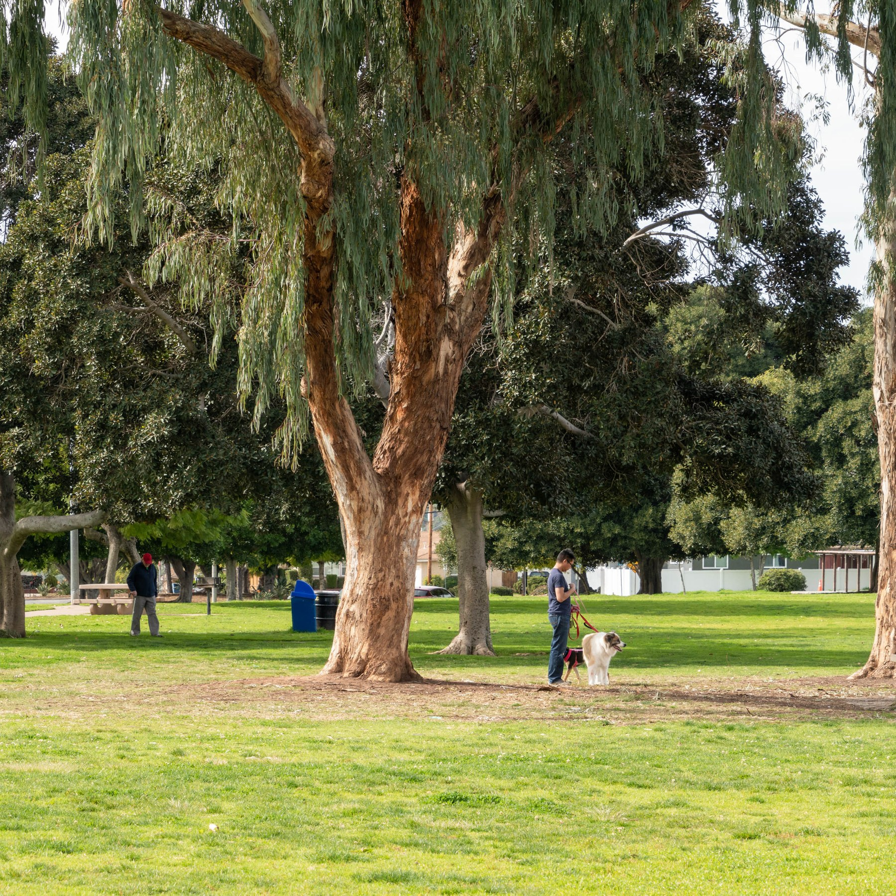 Allied Gardens, San Diego CA - Neighborhood Guide