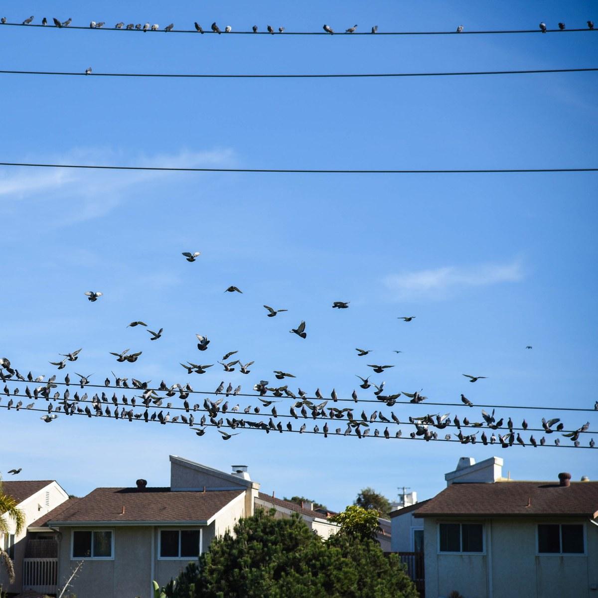 Point Loma Heights, San Diego CA - Neighborhood Guide