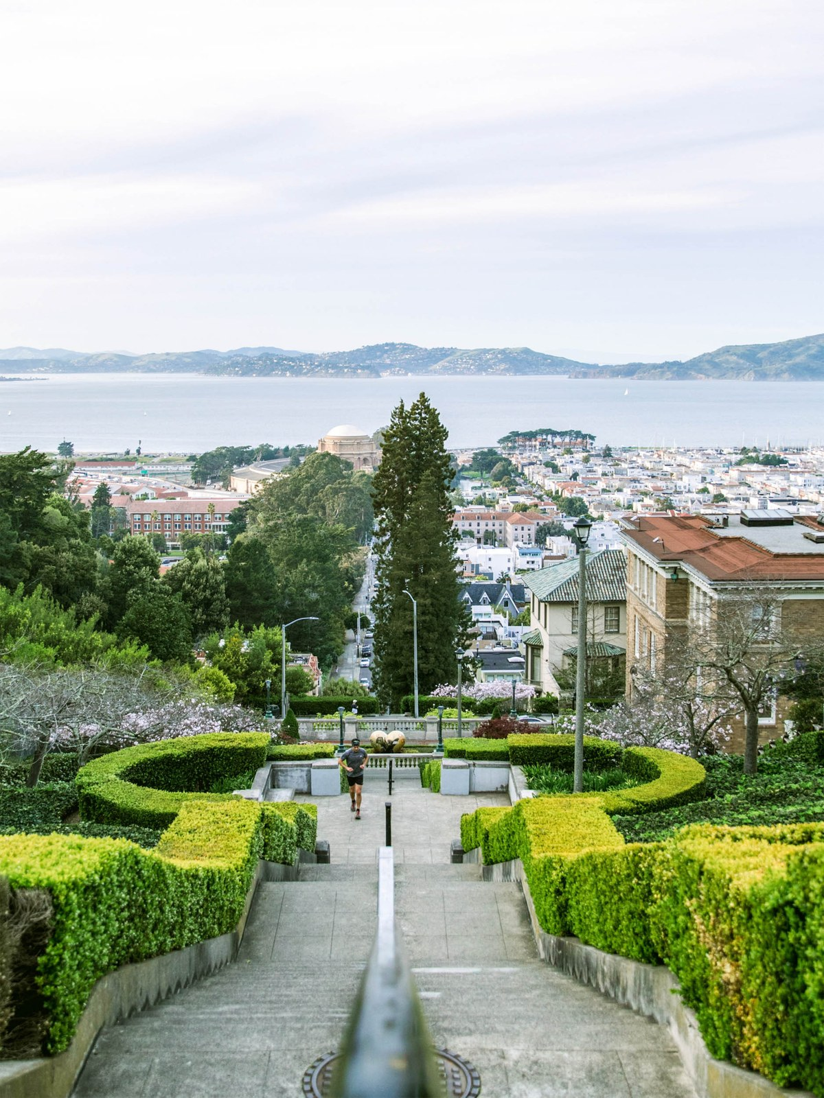 Pacific Heights Pacific Heights Neighborhood Guide