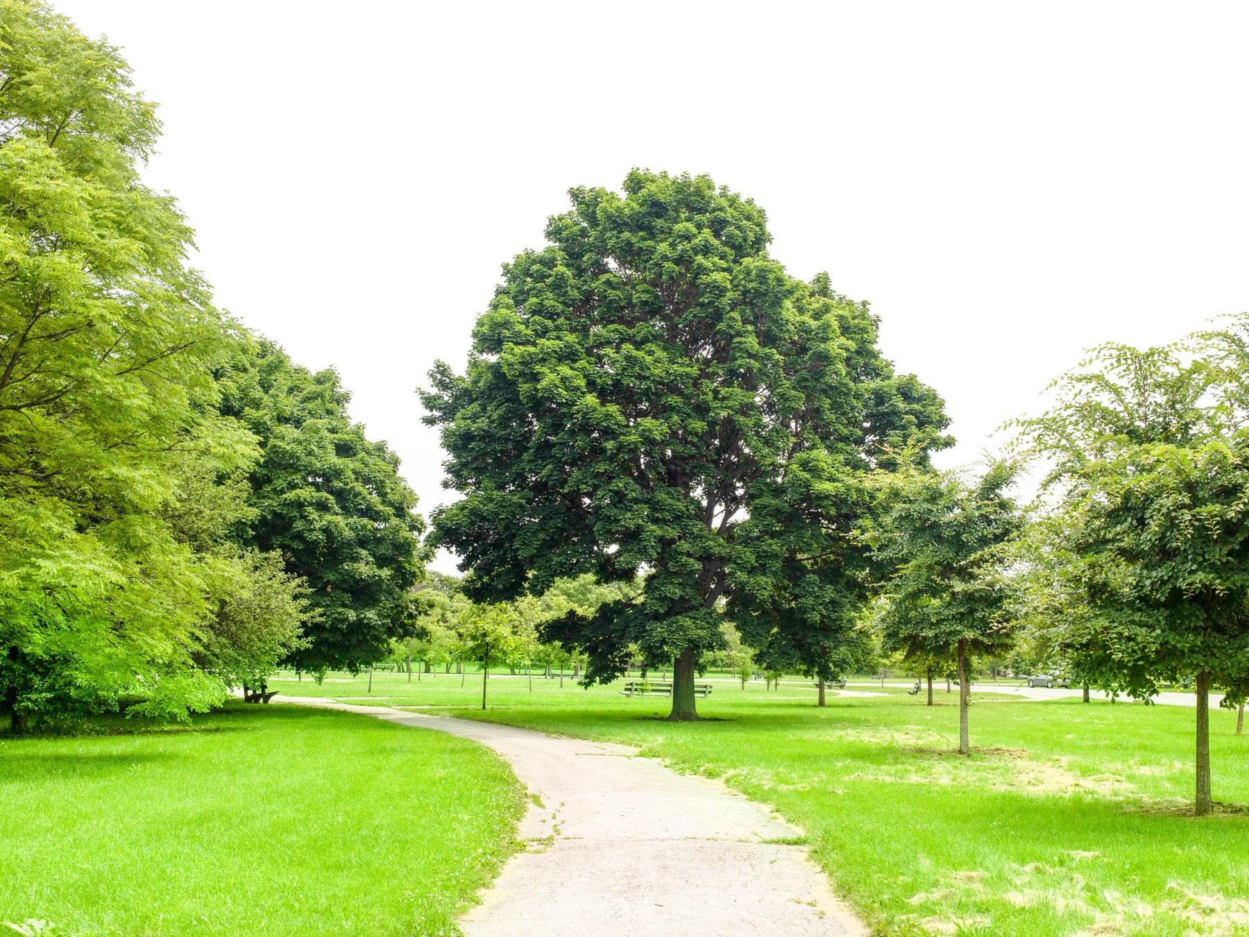 Marquette Park, Chicago IL - Neighborhood Guide   Trulia